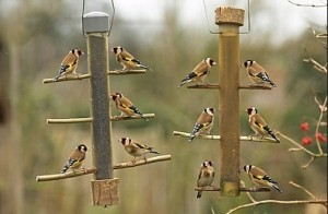 finches feeders