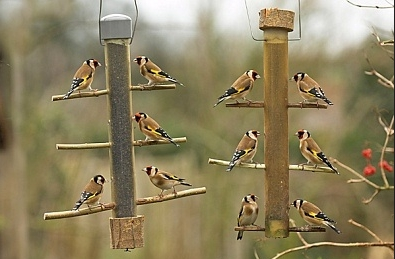 feeder finch model perkypet wild bf k com feeders bird carousel us